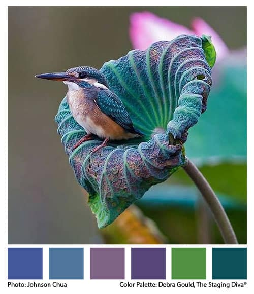 Color Palette from hummingbird